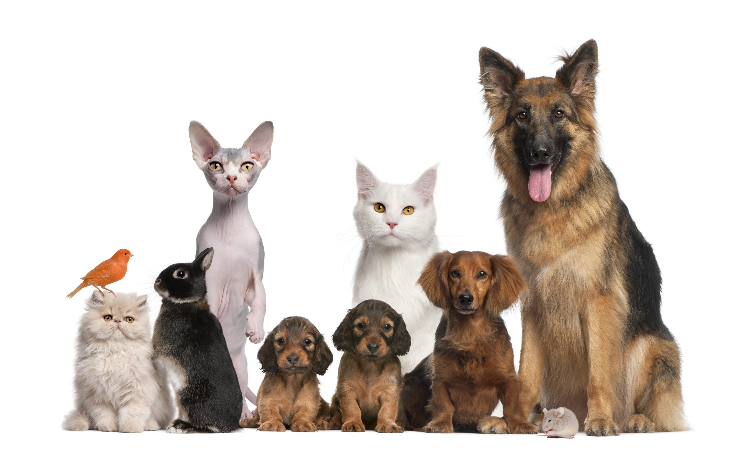 Start a Pet Sitting Business and make serious money online with retail and in person! #petsitting #loveyourpets #petsittingretail #makemoneyonline
